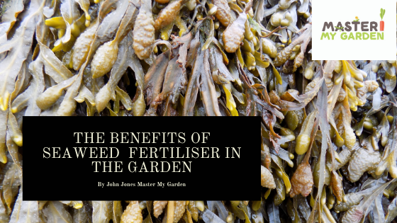 Is seaweed a good fertiliser for plants?