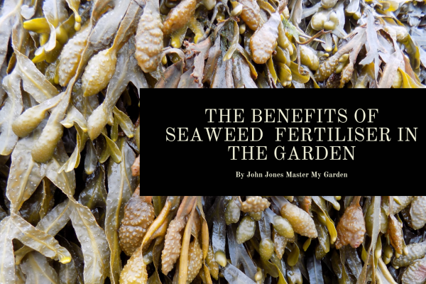 THE BENEFITS OF SEAWEED FERTILISER
