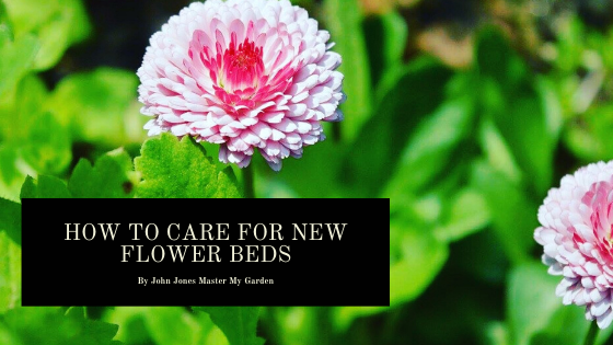 How to care for flower beds