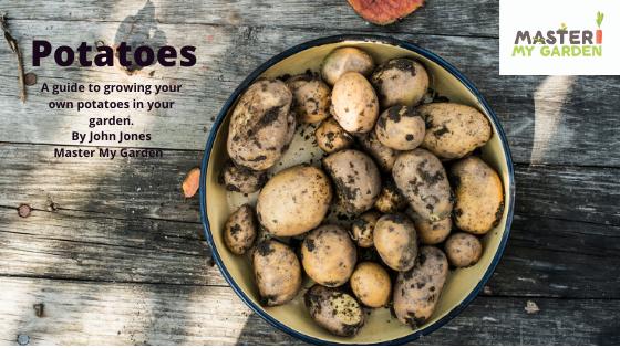 How do you grow potatoes?