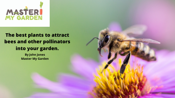 Best plants to attract bees and pollinators