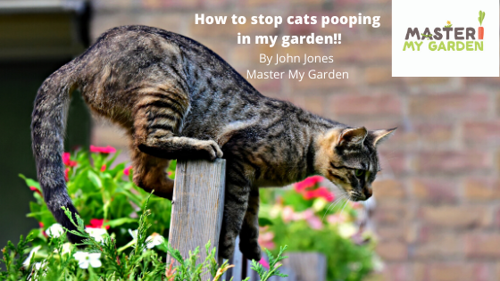 How to stop cats pooing in my garden
